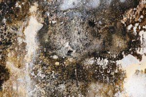 Mold Remediation Rockville MD