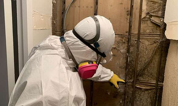 Mold Remediation Gaithersburg MD